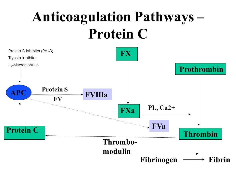 Anticoagulation Pathways – Protein C