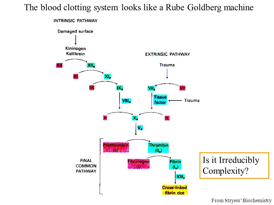 The blood clotting system looks like a Rube Goldberg machine