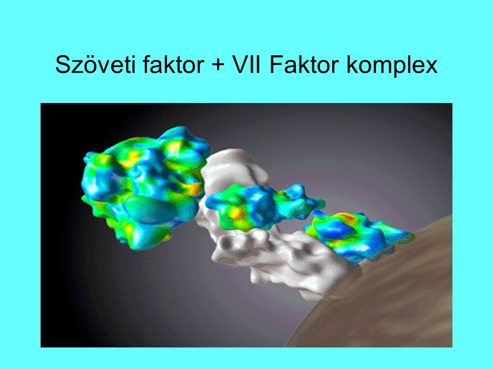 Szöveti faktor + VII Faktor komplex