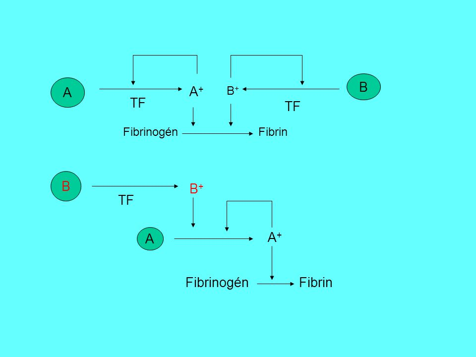 B A. A+ B+ TF. TF. Fibrinogén Fibrin.
