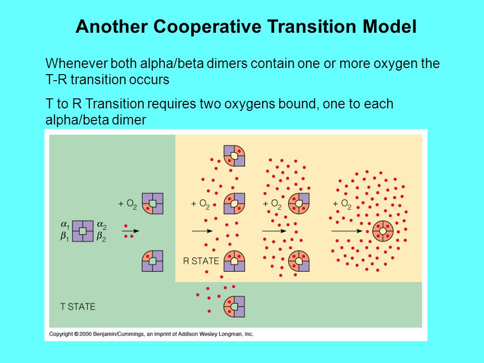 Another Cooperative Transition Model