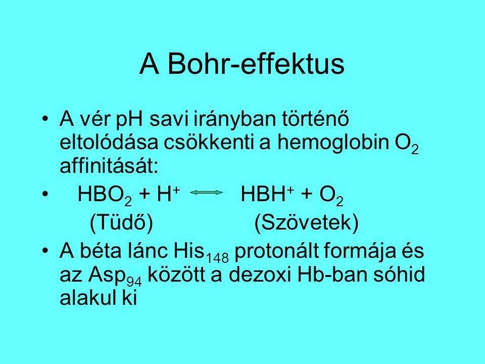A Bohr-effektus A vér pH savi irányban történő eltolódása csökkenti a hemoglobin O2 affinitását: HBO2 + H+ HBH+ + O2.