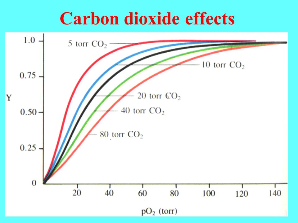 Carbon dioxide effects