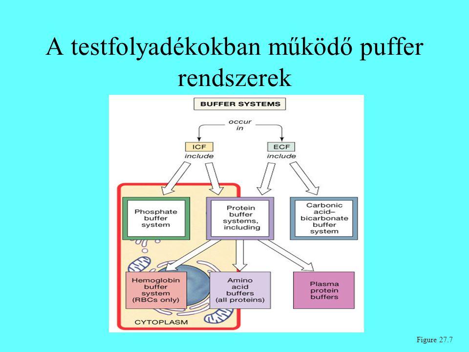 A testfolyadékokban működő puffer rendszerek