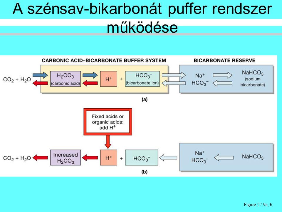 A szénsav-bikarbonát puffer rendszer működése