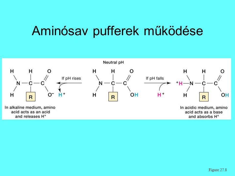 Aminósav pufferek működése