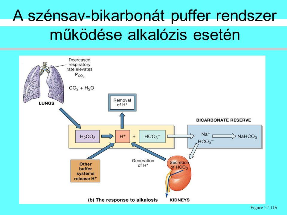 A szénsav-bikarbonát puffer rendszer működése alkalózis esetén