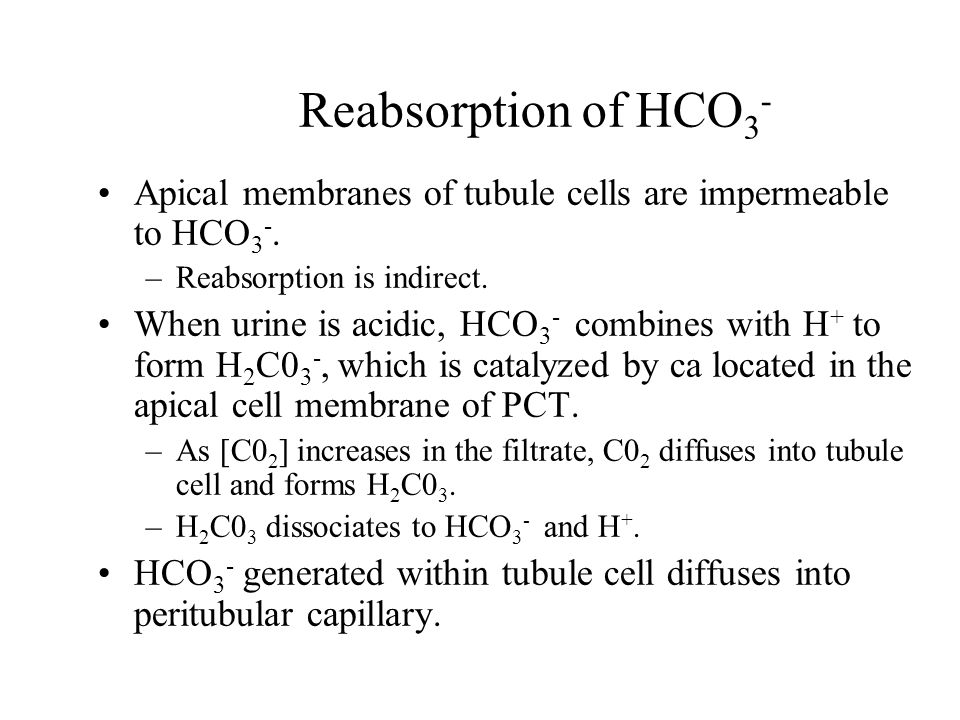 Reabsorption of HCO3- Apical membranes of tubule cells are impermeable to HCO3-. Reabsorption is indirect.