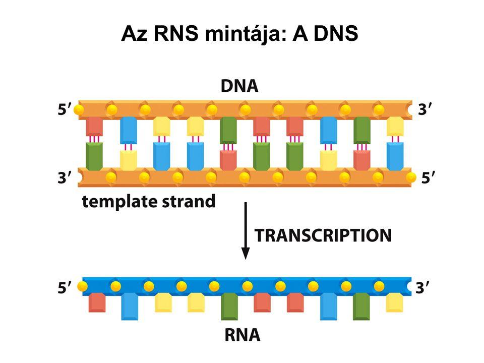 Az RNS mintája: A DNS
