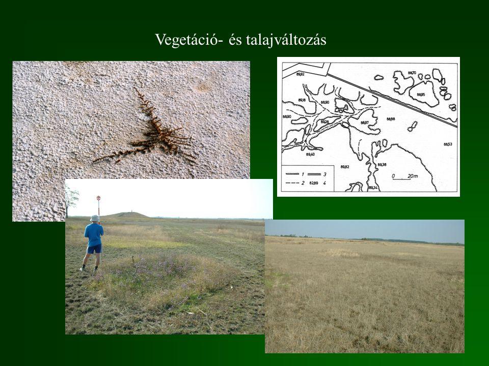 Vegetáció- és talajváltozás
