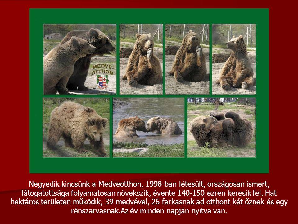 Negyedik kincsünk a Medveotthon, 1998-ban létesült, országosan ismert, látogatottsága folyamatosan növekszik, évente 140-150 ezren keresik fel.