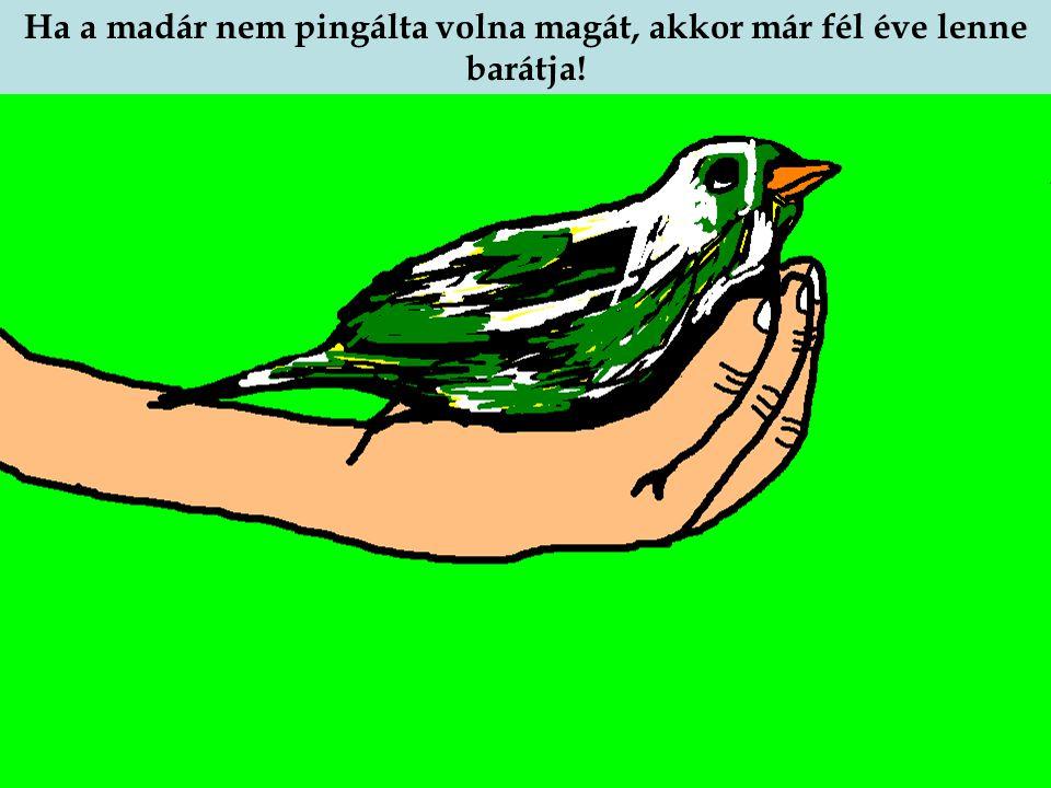 Ha a madár nem pingálta volna magát, akkor már fél éve lenne barátja!