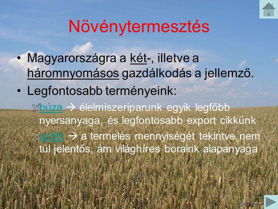 Növénytermesztés Magyarországra a két-, illetve a háromnyomásos gazdálkodás a jellemző. Legfontosabb terményeink: