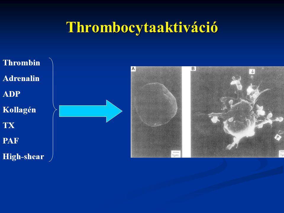 Thrombocytaaktiváció