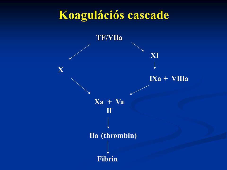 Koagulációs cascade TF/VIIa XI X IXa + VIIIa Xa + Va II IIa (thrombin)