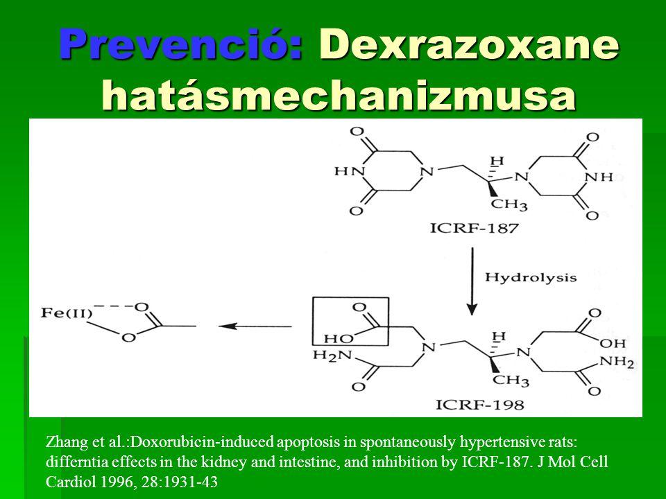 Prevenció: Dexrazoxane hatásmechanizmusa