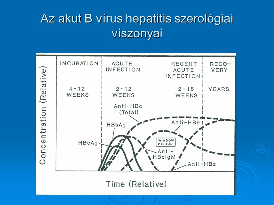 Az akut B vírus hepatitis szerológiai viszonyai