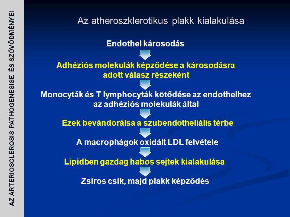 Az atheroszklerotikus plakk kialakulása