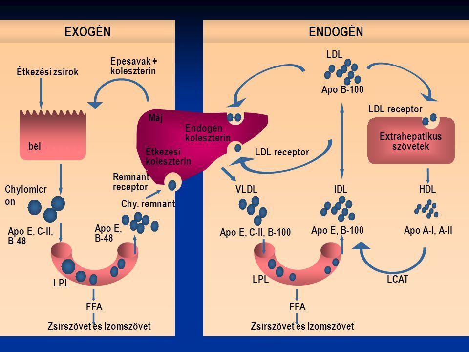 EXOGÉN ENDOGÉN LDL Epesavak + koleszterin Étkezési zsírok Apo B-100