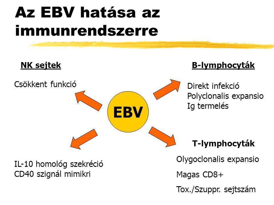 Az EBV hatása az immunrendszerre