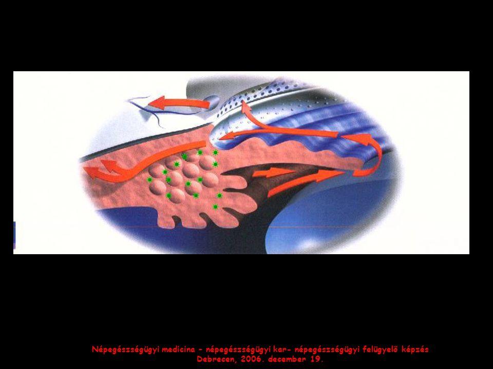 Népegészségügyi medicina – népegészségügyi kar- népegészségügyi felügyelő képzés