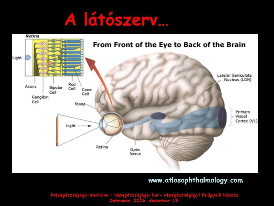 A látószerv… www.atlasophthalmology.com
