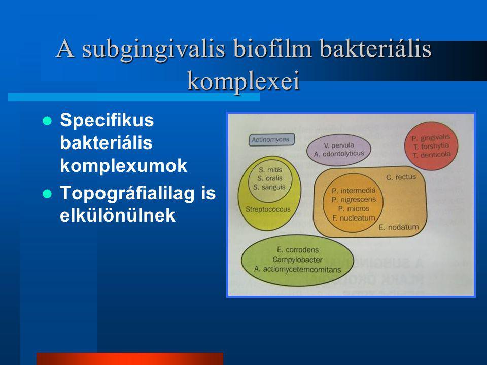 A subgingivalis biofilm bakteriális komplexei
