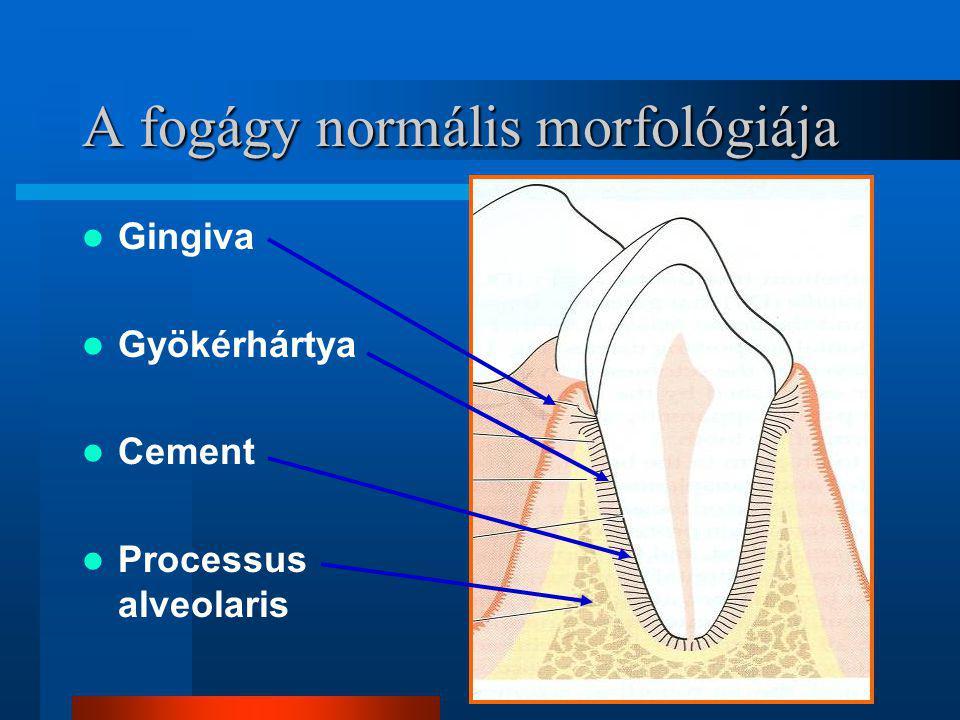 A fogágy normális morfológiája