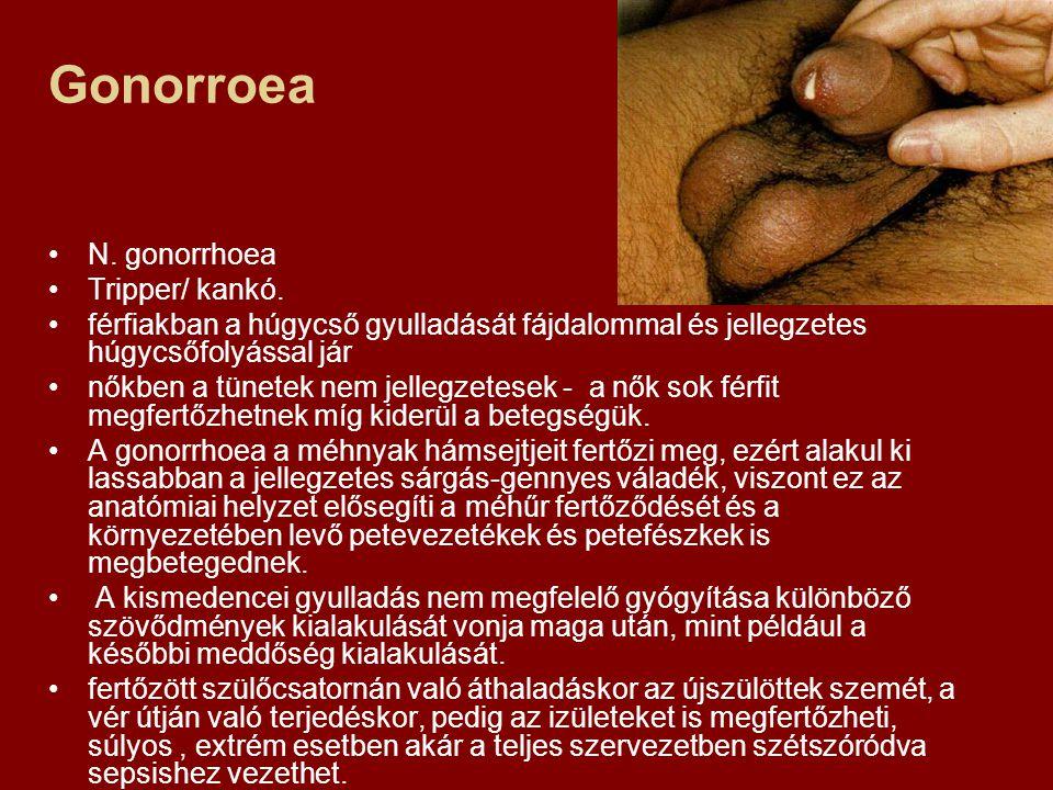 Gonorroea N. gonorrhoea Tripper/ kankó.