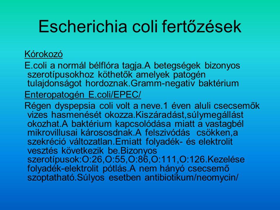 Escherichia coli fertőzések
