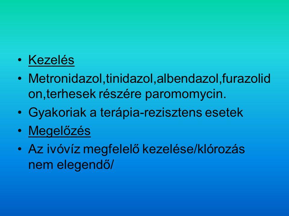 Kezelés Metronidazol,tinidazol,albendazol,furazolidon,terhesek részére paromomycin. Gyakoriak a terápia-rezisztens esetek.