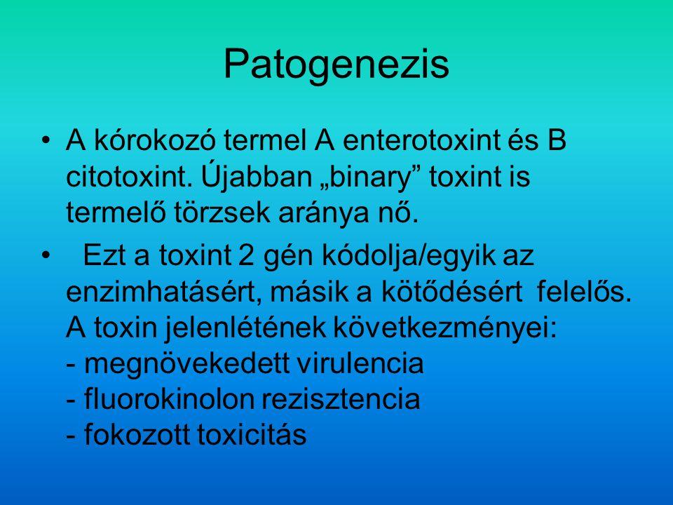 """Patogenezis A kórokozó termel A enterotoxint és B citotoxint. Újabban """"binary toxint is termelő törzsek aránya nő."""