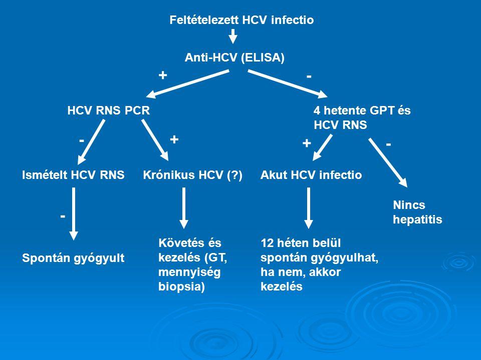 + - - + + - - Feltételezett HCV infectio Anti-HCV (ELISA) HCV RNS PCR