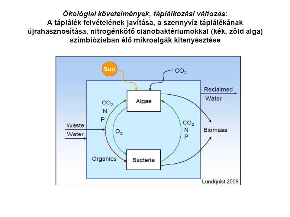 Ökológiai követelmények, táplálkozási változás: A táplálék felvételének javítása, a szennyvíz táplálékának újrahasznosítása, nitrogénkötő cianobaktériumokkal (kék, zöld alga) szimbiózisban élő mikroalgák kitenyésztése