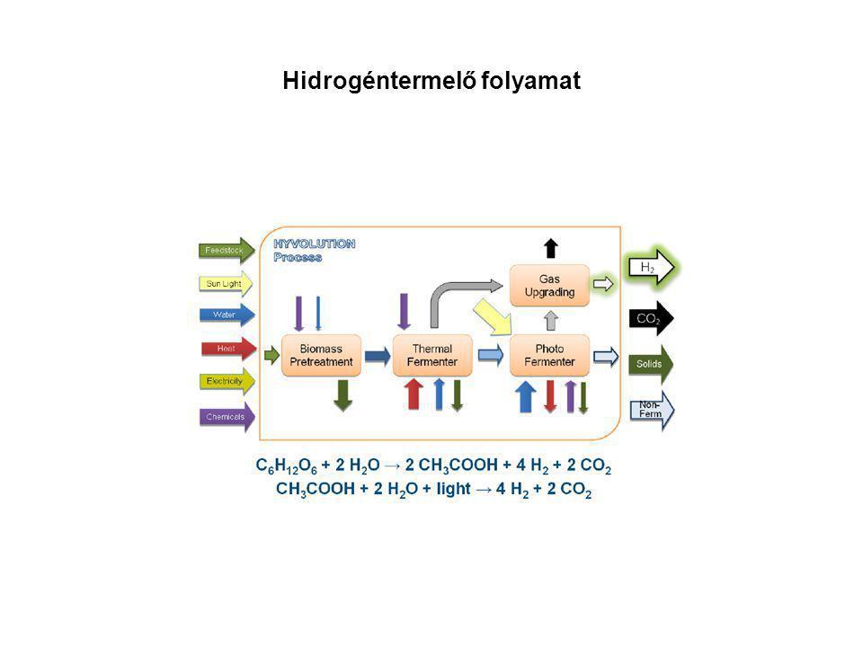 Hidrogéntermelő folyamat