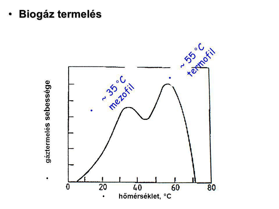 Biogáz termelés ~ 55 °C termofil ~ 35 °C mezofil gáztermelés sebessége