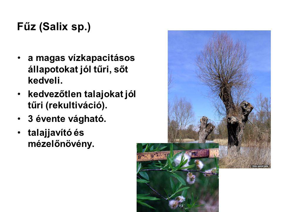 Fűz (Salix sp.) a magas vízkapacitásos állapotokat jól tűri, sőt kedveli. kedvezőtlen talajokat jól tűri (rekultiváció).