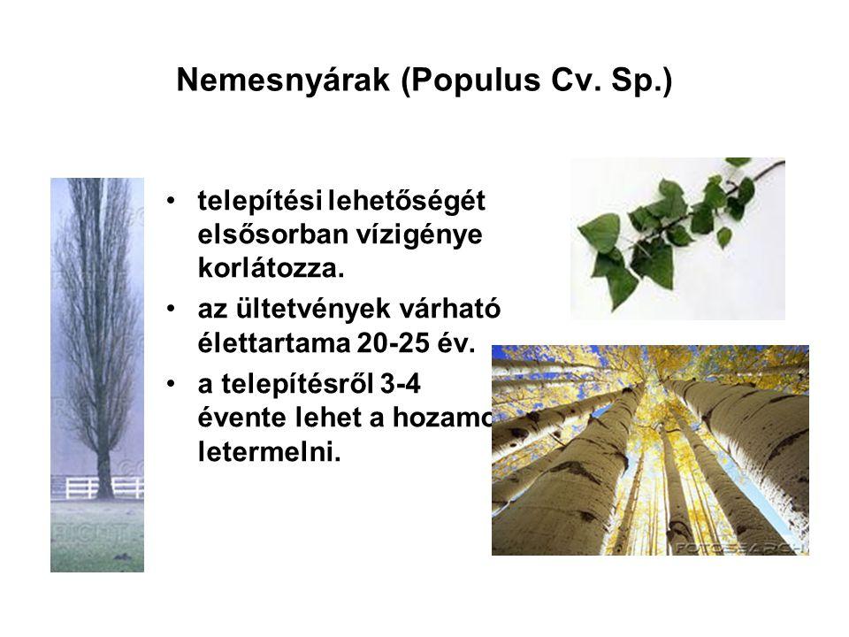 Nemesnyárak (Populus Cv. Sp.)