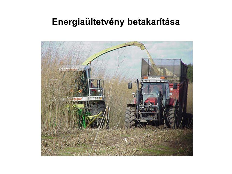 Energiaültetvény betakarítása