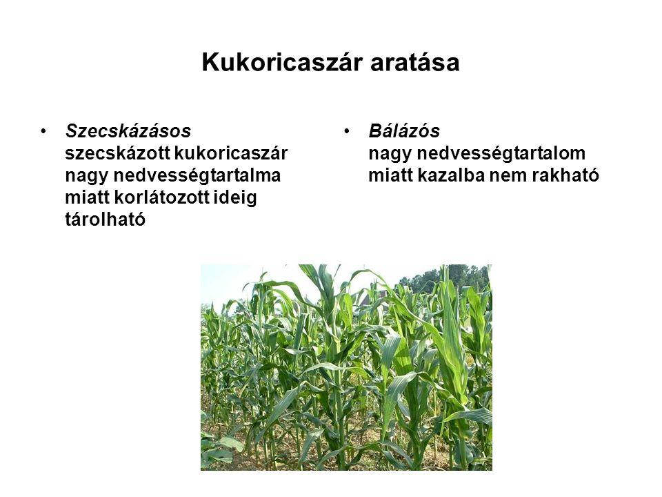 Kukoricaszár aratása Szecskázásos szecskázott kukoricaszár nagy nedvességtartalma miatt korlátozott ideig tárolható.