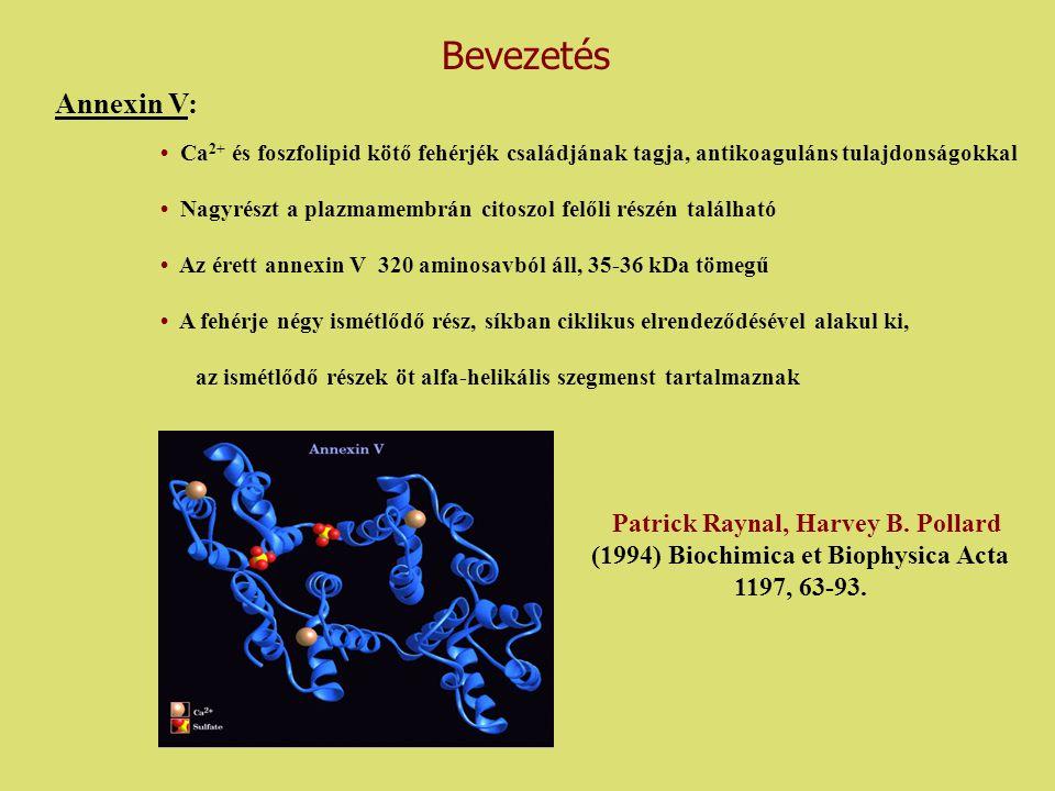 Patrick Raynal, Harvey B. Pollard