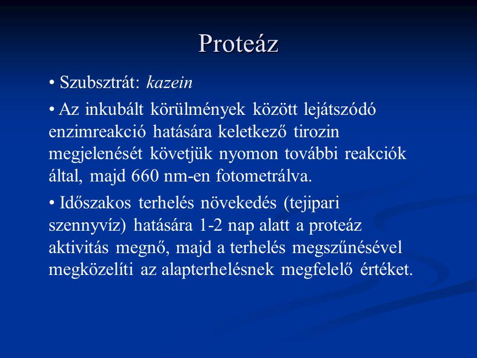 Proteáz Szubsztrát: kazein