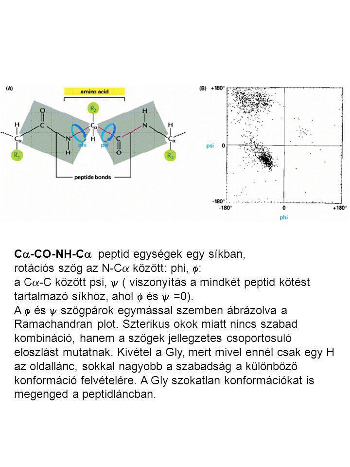 C-CO-NH-C peptid egységek egy síkban,