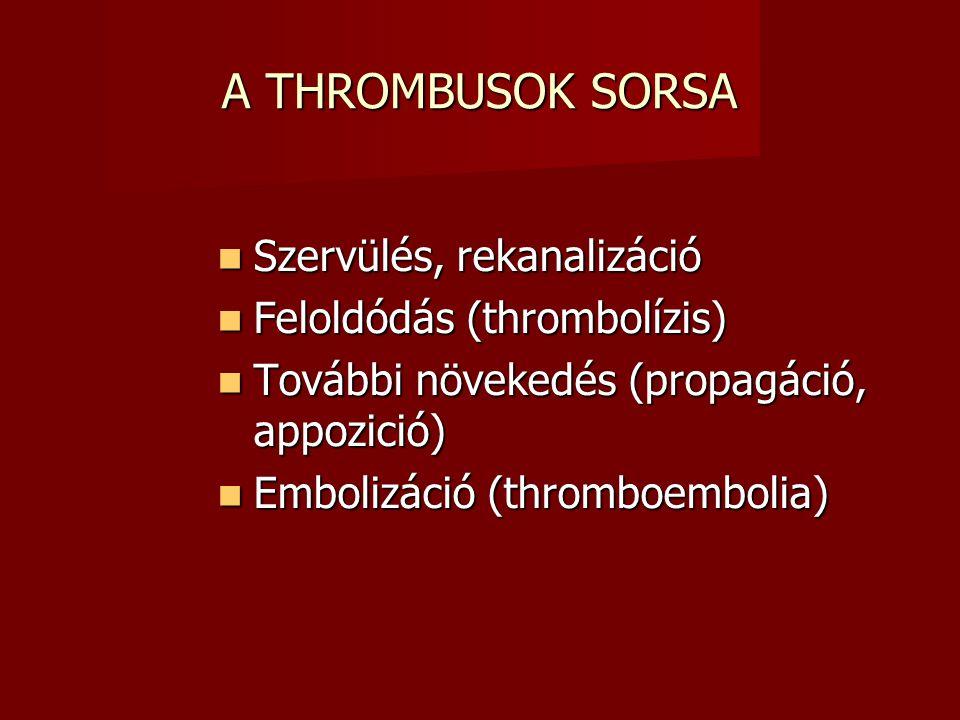 A THROMBUSOK SORSA Szervülés, rekanalizáció Feloldódás (thrombolízis)