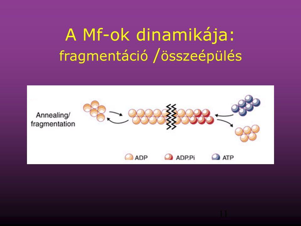 A Mf-ok dinamikája: fragmentáció /összeépülés