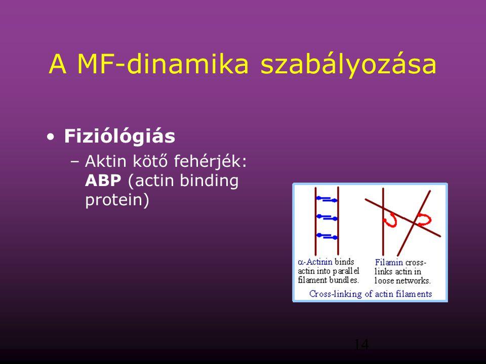 A MF-dinamika szabályozása