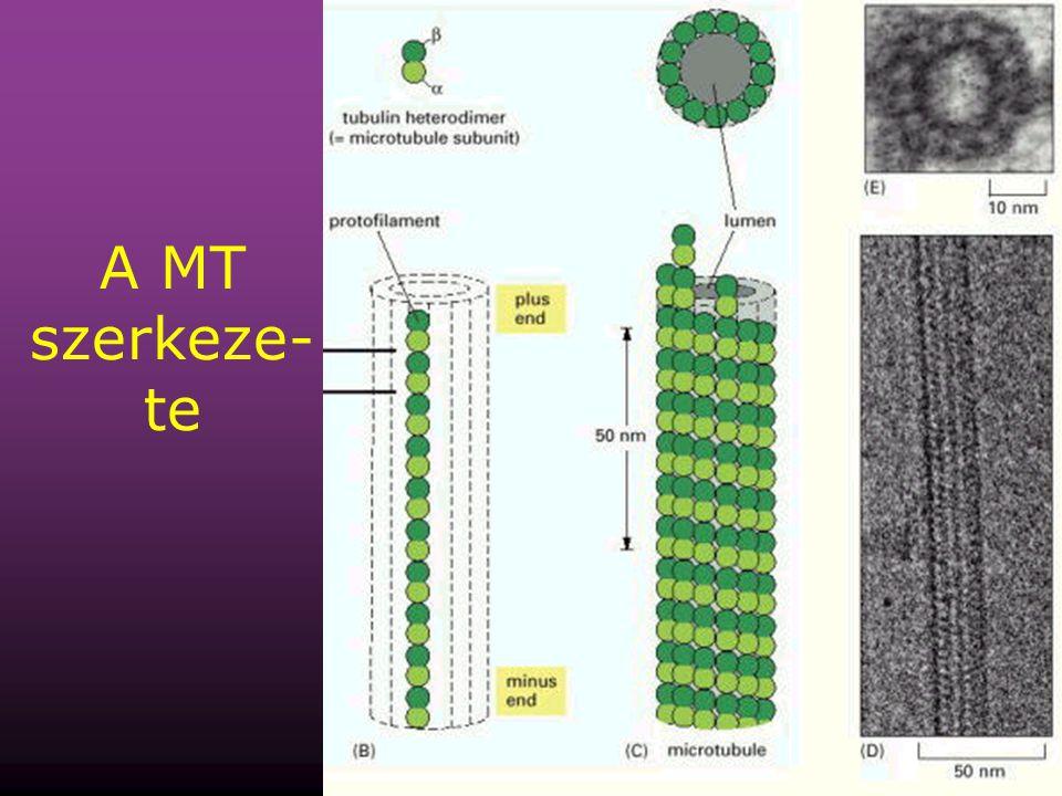A MT szerkeze-te