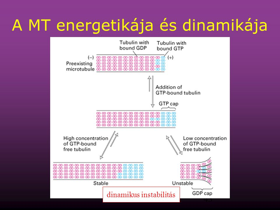 A MT energetikája és dinamikája