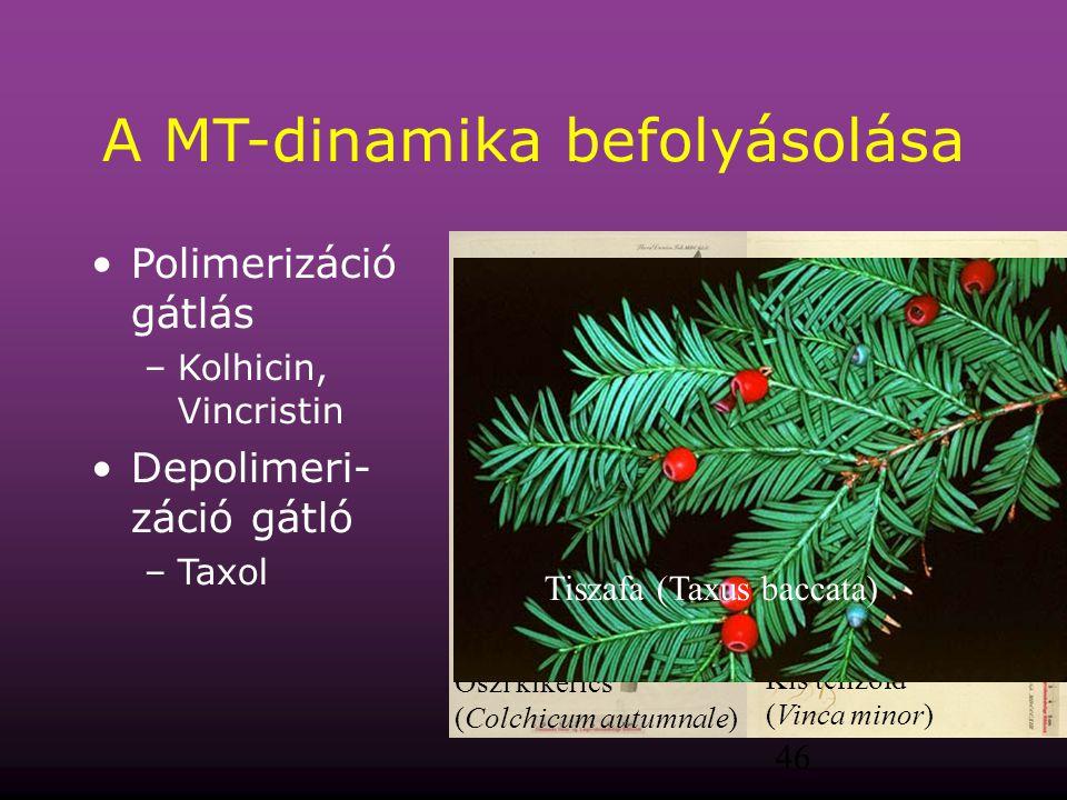 A MT-dinamika befolyásolása