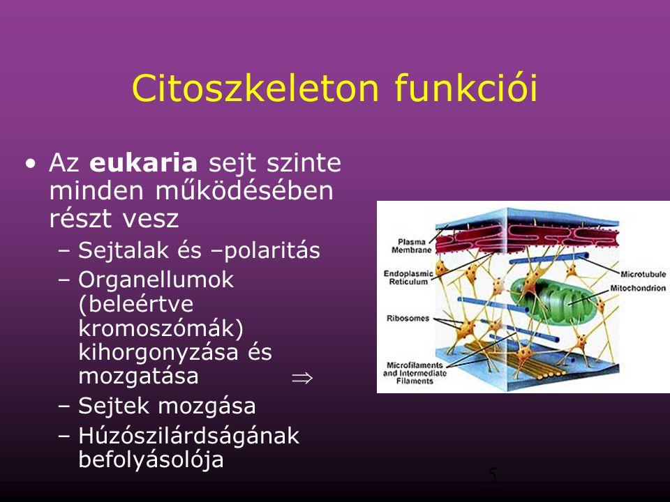 Citoszkeleton funkciói